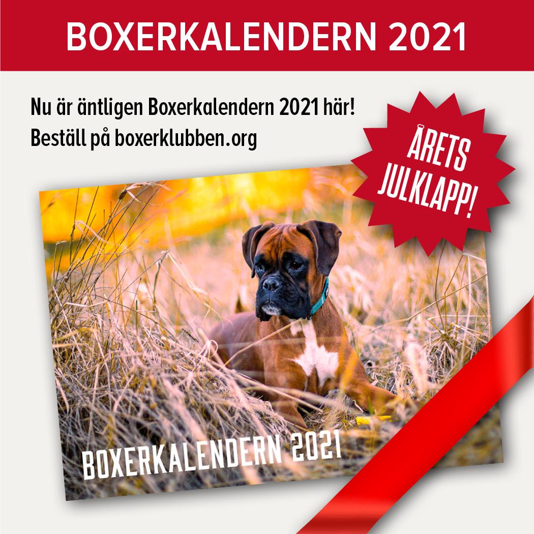 boxerkalendernMiniBestall2021