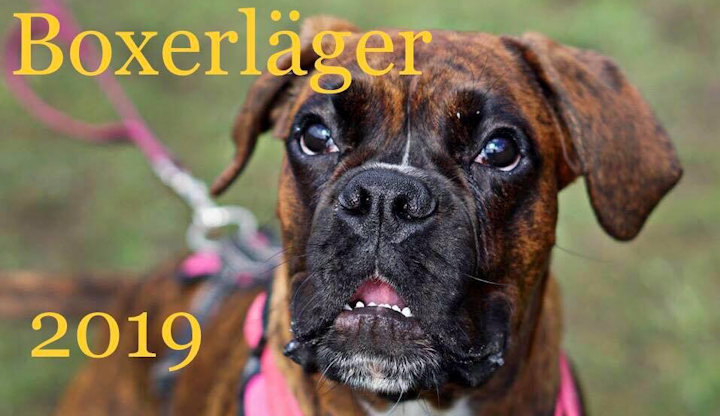 lager2019